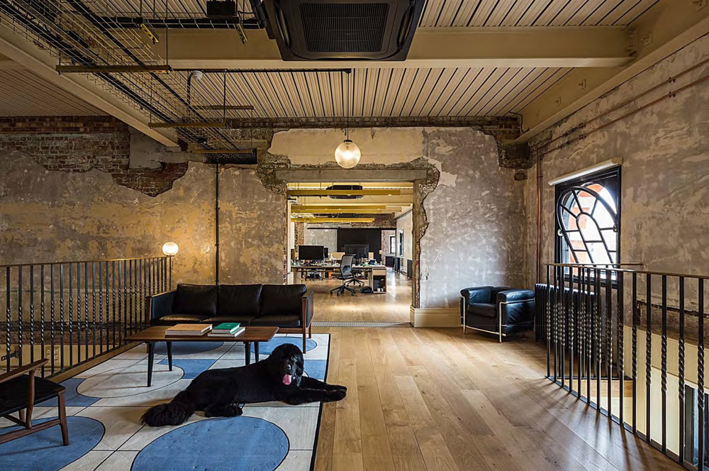 Large black dog in open plan space at Squire and Partners
